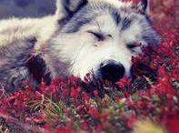 Wölfe / Einfach schön