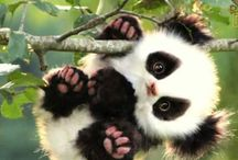 minik panda
