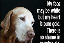 SENIOR Paws Need Adopt / Rescue too! / Senior animals are frequently overlooked in shelters and rescues.They too make wonderful companions. **post all SENIORS 5 years and up** No Breeder or Seller posts here.