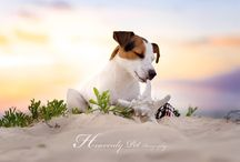 Inspiration Dog photography
