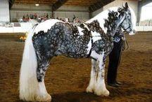 Horses / Everything Horses