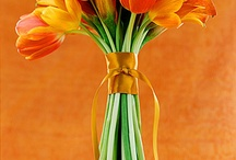 beautiful tulips / flower tulip collections