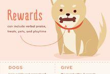 Stella Rose & Beauregard Francis / Westie Puppie/Frenchie