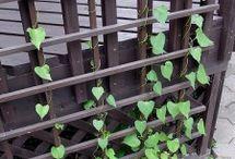 Gardening - Vertical, Green Wall, Climbing Wall