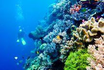 """Wakatobi Island / """" Underwater paradise from southeast Indonesia """"  – #WakatobiIndonesia -"""