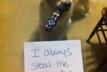 Animal Shaming! / by Abby Brumleve