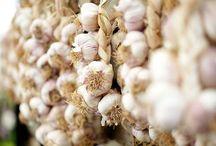 Growing Garlic / Advice and tips on growing garlic