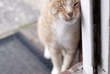 Kittens & cats / by jean polk