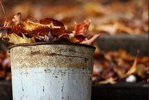 Autumn/Fall / The most lovable season!