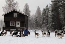 Hiver Laponie Suédoise