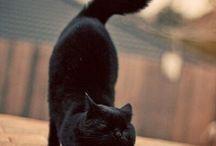 動物ー cats