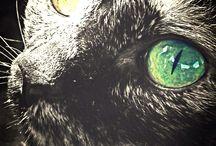 Собаченция и кошкандер / Мои животные