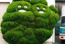 zelena je trava