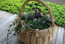 Gardening / by Eden Jamison
