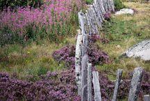 fences / by Jerry Tyson