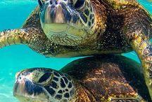 Turtles stuff
