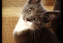 Cats / All cute cats and kittens