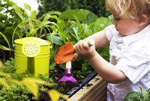Moestuin voor groot & klein ! / Kinderen op avontuur in hun eigen ieniemienie tuintje of ga zelf aan de slag in je vierkante meter moestuin !