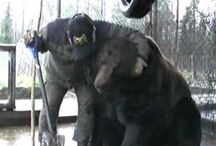 Bear videos from Finland... all shared from Youtube / Some bear videos from Finland.  I have found all these from Youtube