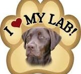 MY•♥• 4 CHOCOLATE LABS / A dog is the only thing on earth that loves you more than he loves himself.