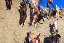 Koně firmy breyer