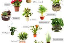 planta interiores