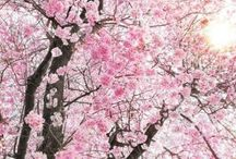Fototapet Floral