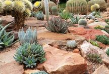 Cacti and succulent garden