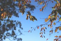 for autumn days / Autumnal shades and bright, clear days
