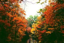 hello, autumn / Things associated with Autumn. Weather, Activities, Nature, Food