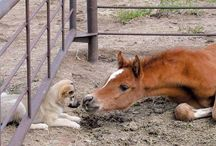 Dogs & Horses / Adorable pictures of dogs and horses together.