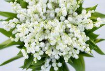 Swedish Flora