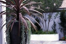Outdoor pots / Creating a gorgeous outdoor area that is interesting and tasteful