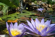 Build A Pond! / Building and maintaining a backyard pond is a fun project that will look beautiful all year round.