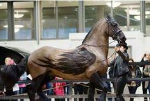 Tosa em cavalos