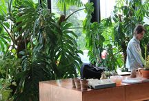 14. (Arch.) - Plants