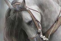 mini poni koni