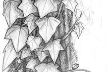 Skóra liście