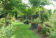 The Garden / Snapshots of the garden