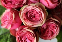 pinks / by Noonan's Wine Country Designs