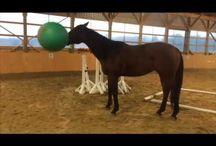 Horse Fun!