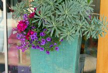 Potted plants vignettes/gardening