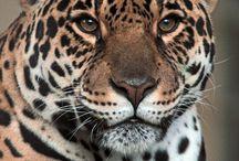 Animals / Animals off the world