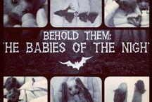 Bats bats and more bats  / Pics of the beautiful night creatures