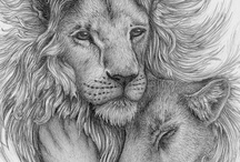 Leeuwen/Tijgers