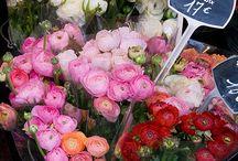 Floristerías / Flower Market