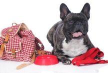 Formas de viajar con mascotas y ayuda