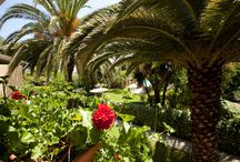 Spiti Prifti Garden!! / Spiti Prifti is a little oasis! Here you can find pictures of our beautiful garden!!