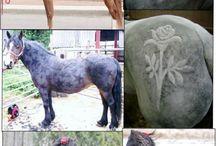 Pferd scheren
