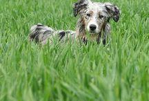 Hundedressur